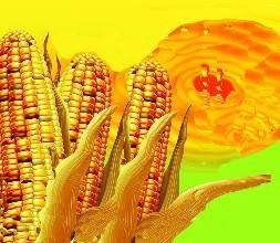5月1日《玉米油》新国标正