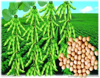 农业农村部:将指导东北地区落实好耕地轮作休